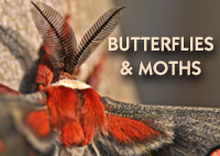 ButterfliesMoths