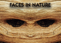 FacesInNature