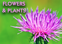 FlowersAndPlants