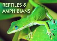 ReptilesAndAmphibians