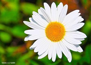 Daisy-BJS.jpg