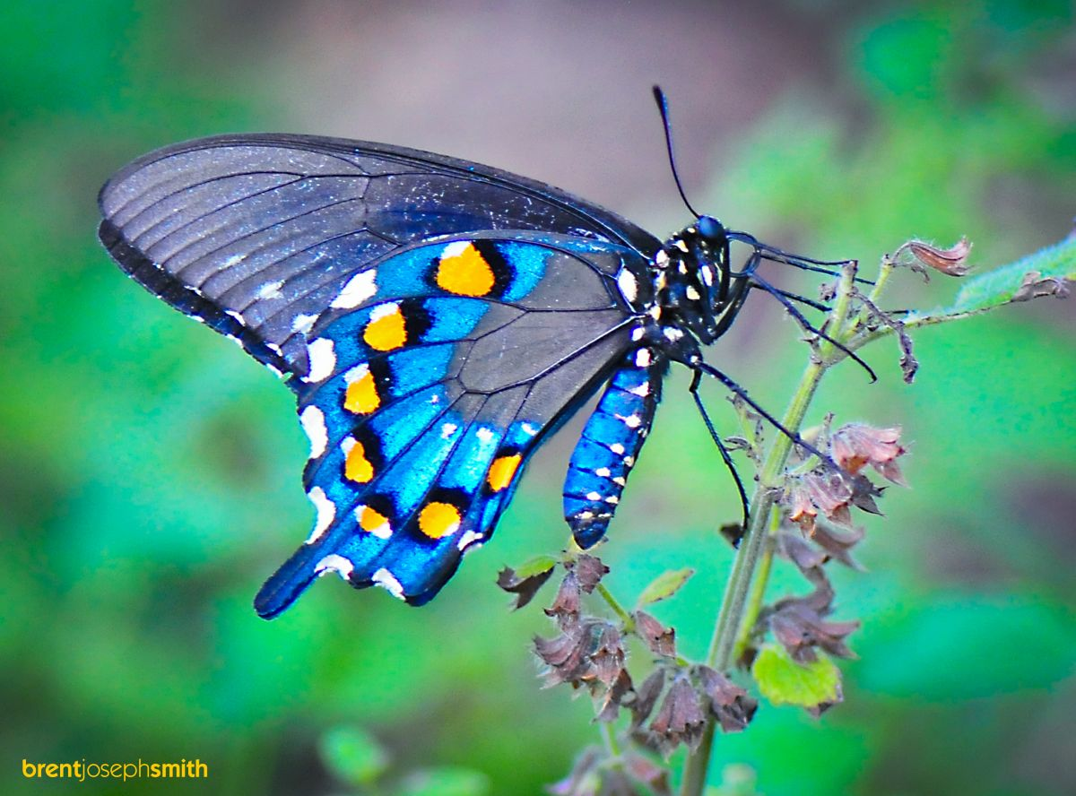Butterflies and Moths - photo#21