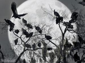 VulturesInMoon_BJS.jpg