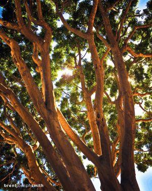07012012-SunlightBJS-c59.jpg